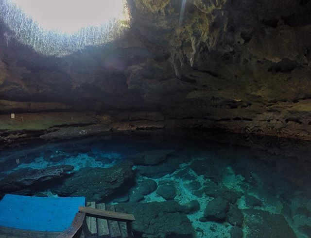 The first time I visited Devil's Den was with my dad. It was his childhood swimming hole in Williston, FL. They swam in it before there was a tunnel cut through the limestone cave, with a staircase leading down to the water in sinkhole. They climbed down a rope ladder from the hole in the cave ceiling! #flogrown