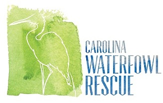 waterfowl rescue