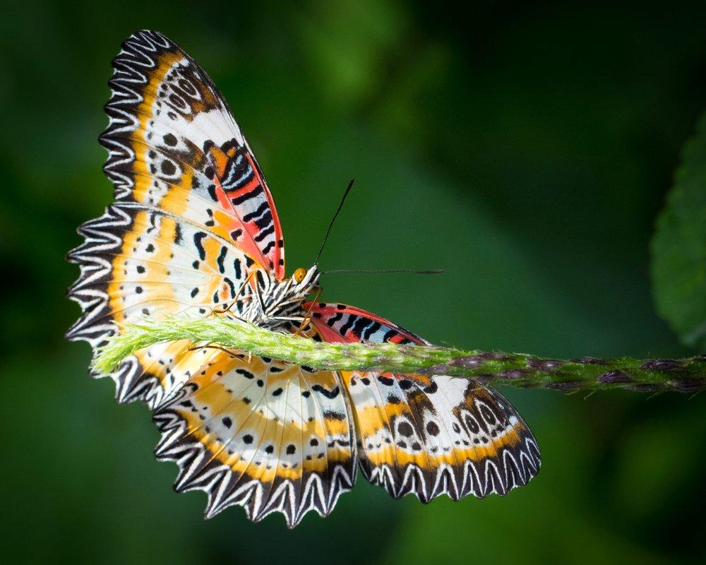 butterflyphoto1.jpg