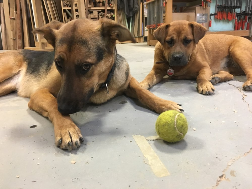 All that milling calls for a pup break. (Meet Loup and Dolly! Photo courtesy of Simon Ford.)