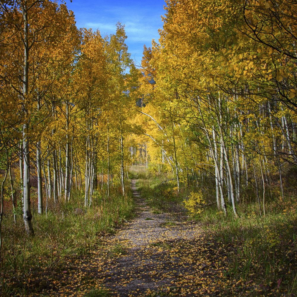colorado-autumn-aspens05.jpg