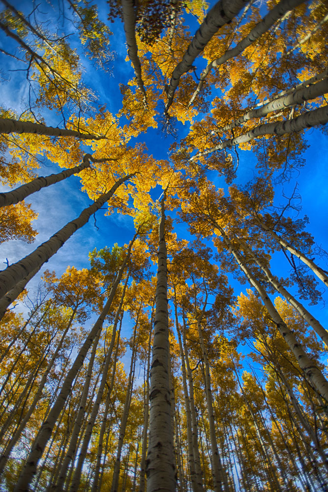 colorado-autumn-aspens11.jpg