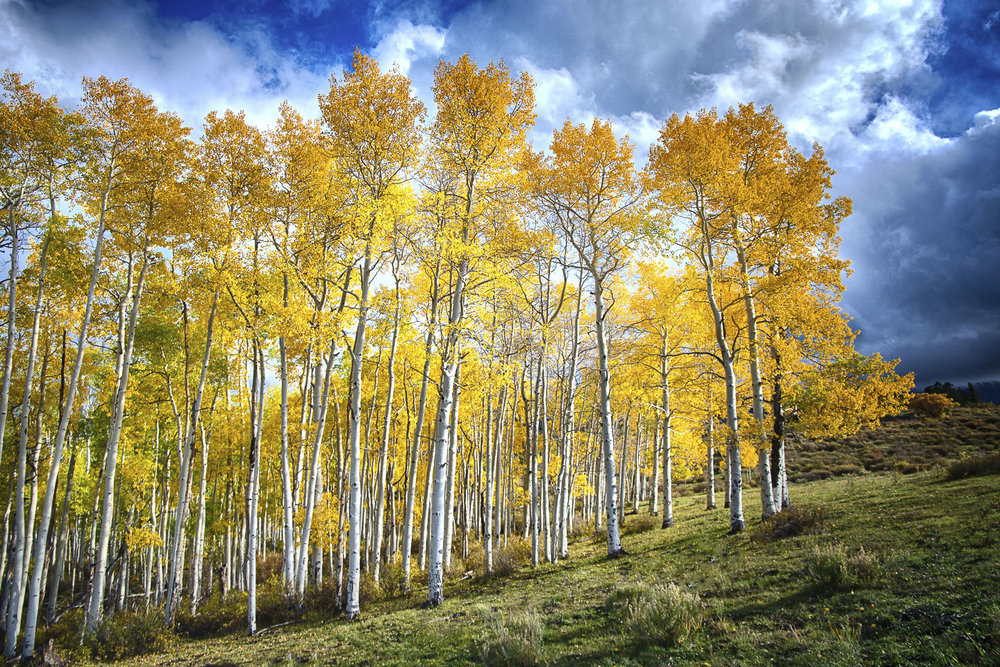 colorado-autumn-aspens15.jpg