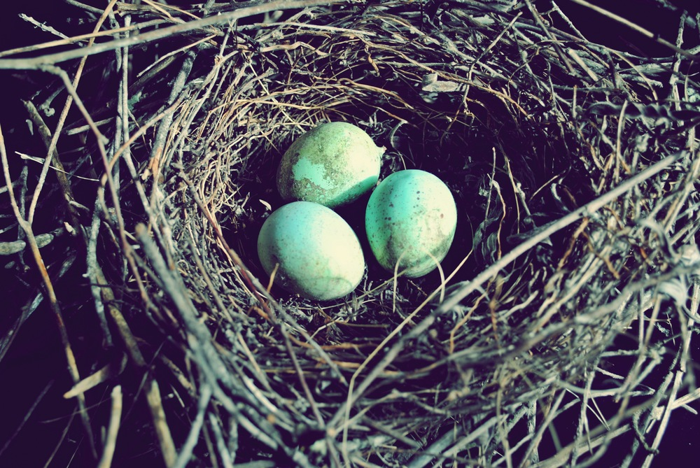 Nest edit.JPG