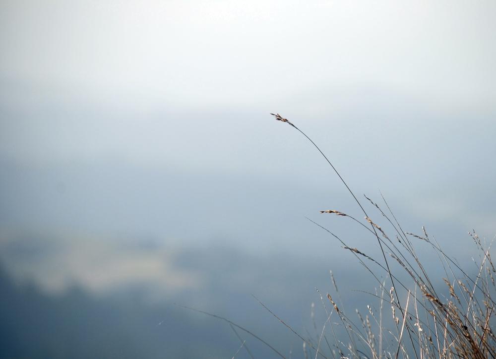 simplegrass - Copy.JPG