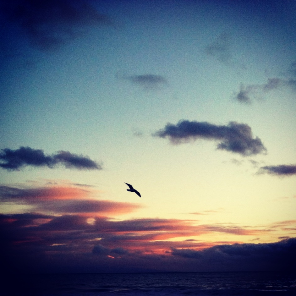 gull at sunset.JPG