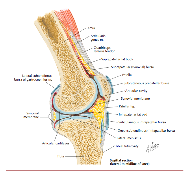 Patellofemoral joint pain 2013 consensus — Rayner & Smale
