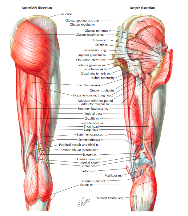 Risk Factors And Assessment Of Hamstring Muscle Strain Injury