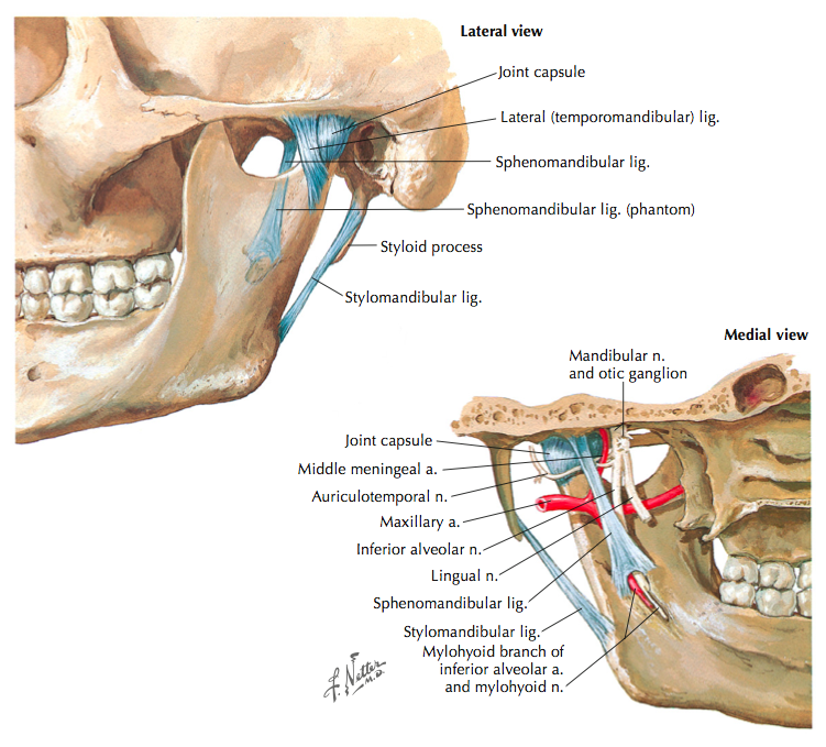 Temporomandibular Joint Disorders Clinical Anatomy Assessment