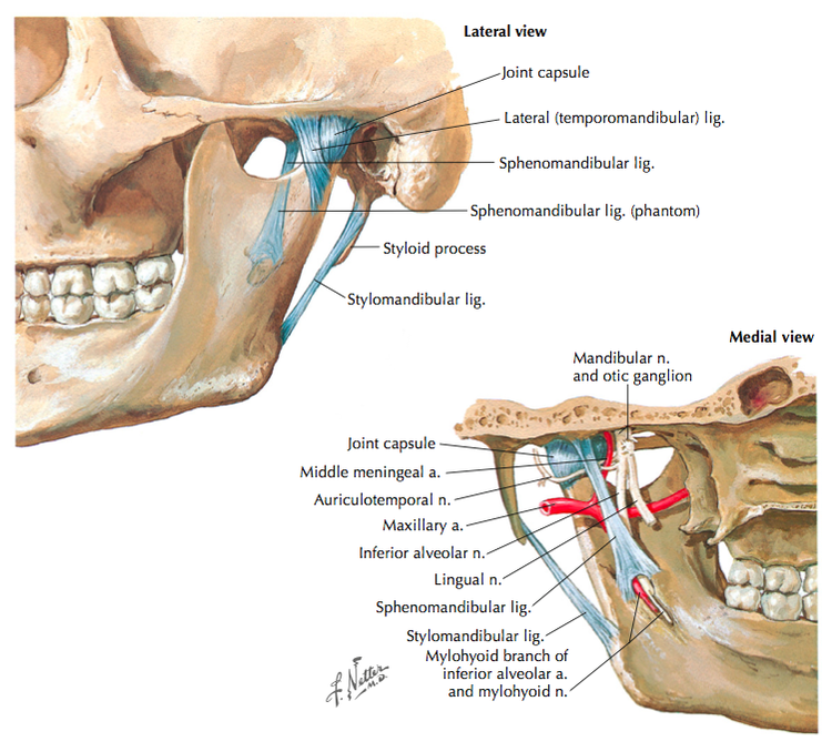 Temporomandibular Joint Disorders - Clinical Anatomy & Assessment ...