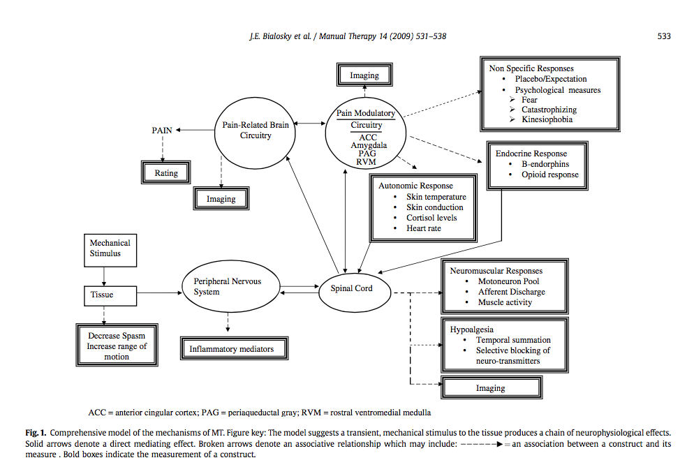 Model of the neurophysiological mechanism of manual therapy (Bialosky, et al., 2009, p. 533)