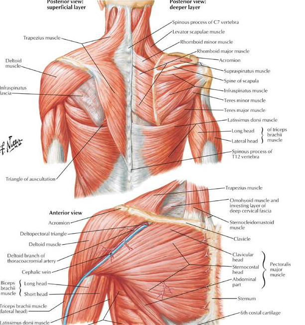 The Role Of The Scapula In Shoulder Impingement Syndrome Part 2