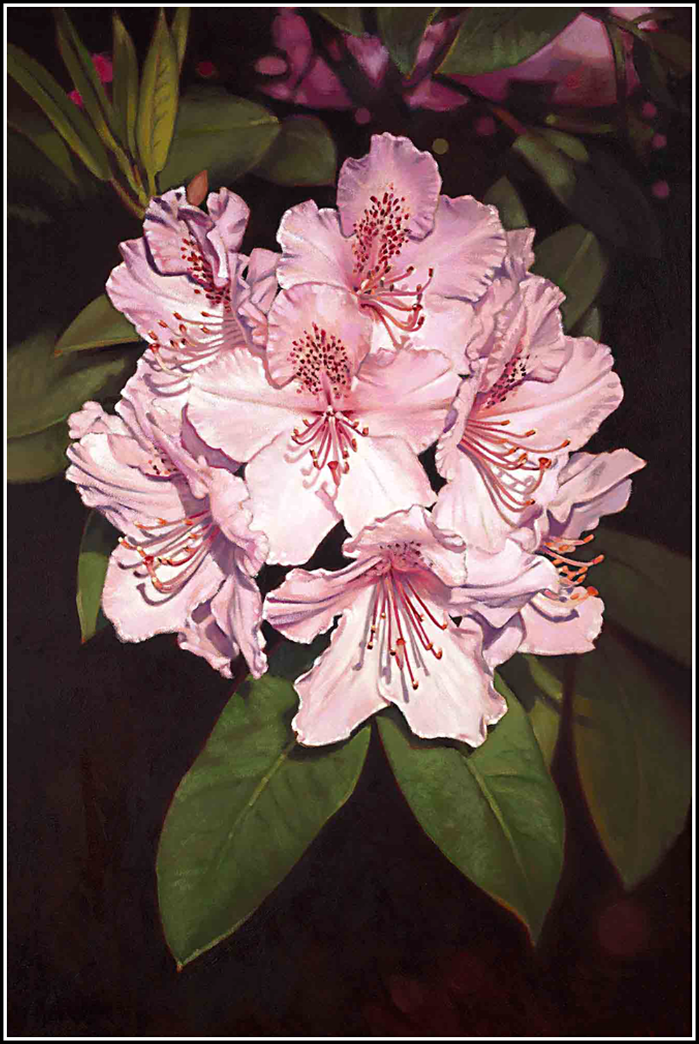 Rhododendron-2.png
