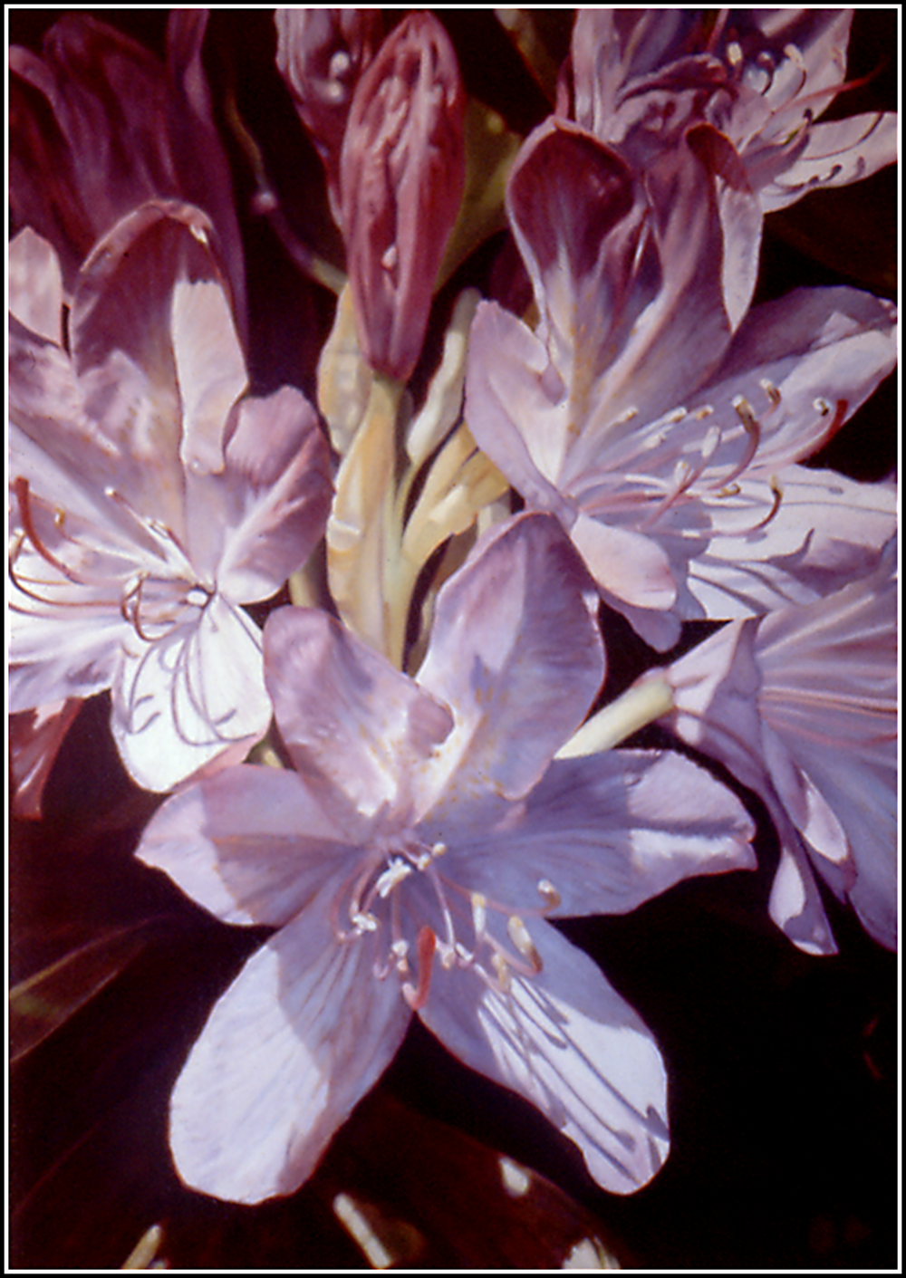 Rhododendron-1.png