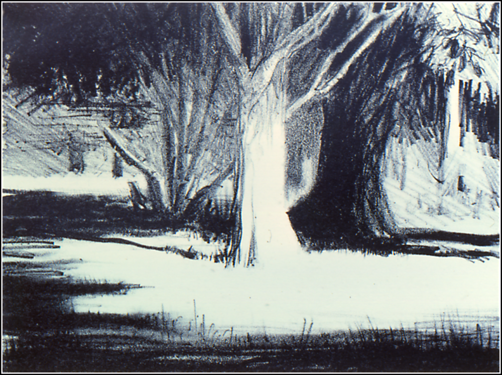 Tree Shadows-litho.png