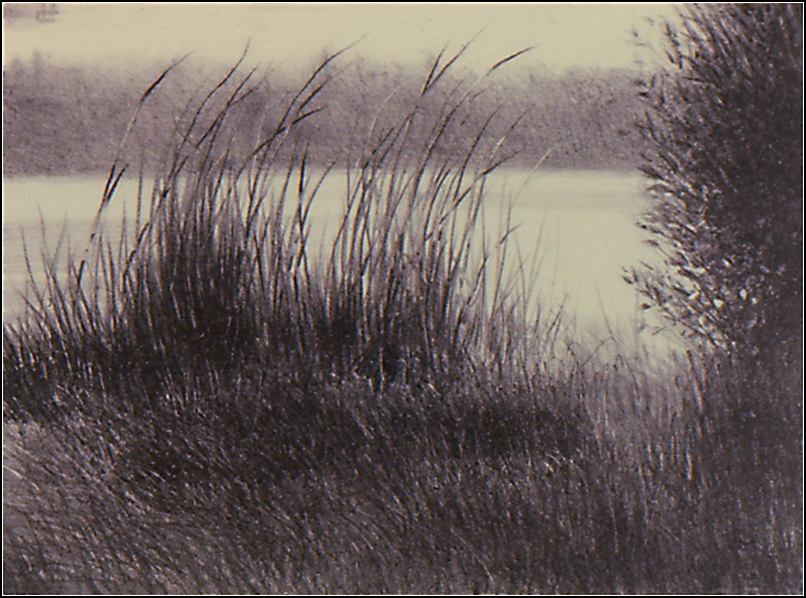 Reeds in Wind.png