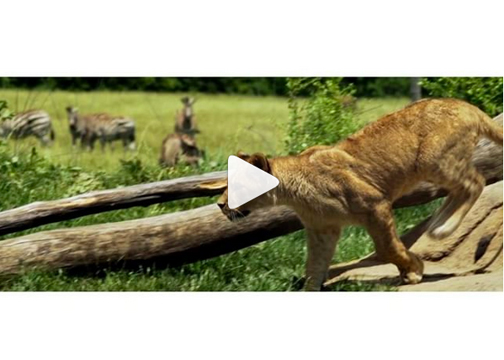 Behind the Scenes with The Columbus Book Project & Stephanie Matthews -- The Columbus Zoo. Video by Loose Films.