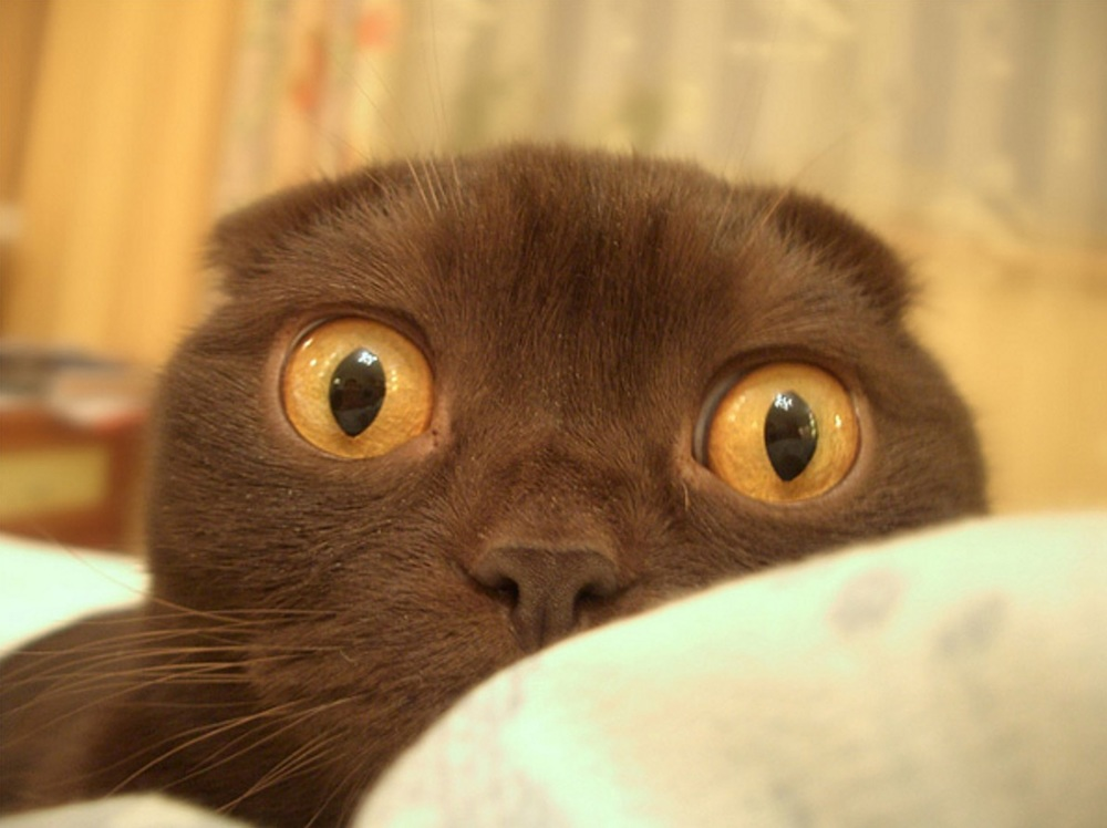 freaked out cat.jpg
