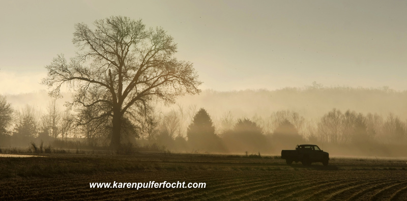 Shelby Farms Morning Fog Pick Up.JPG