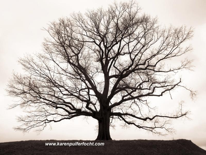 Tree Awaiting Spring_01.JPG