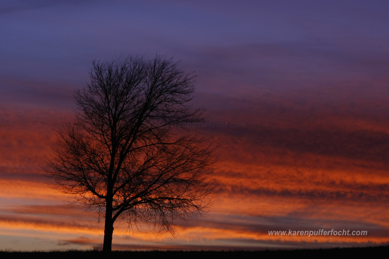 Tree at Sunset Shelby Farms12AA.JPG