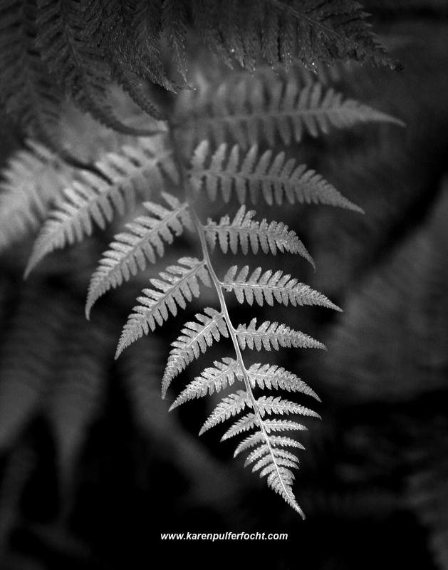 Featherplant.JPG