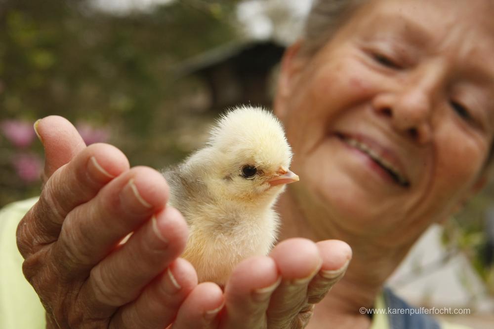 Jean Chicken 3-18-16366.JPG