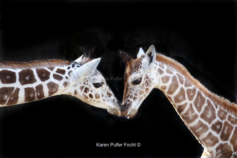 10142017 Memphis Zoo 605abcA.JPG