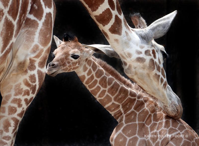 04122019 Memphis Zoo  kpf00.JPG