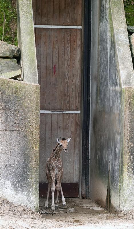 04122019 Memphis Zoo  kpf01.JPG