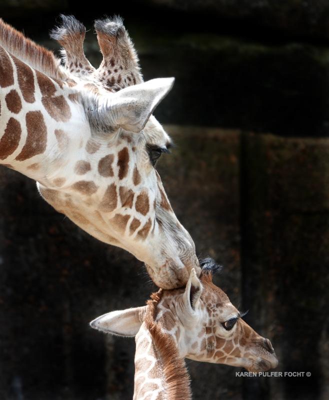 04122019 Memphis Zoo  kpf02.JPG