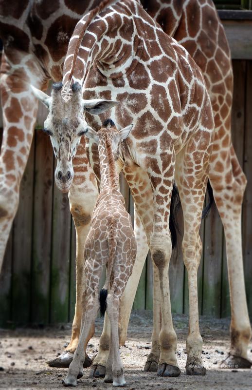 04122019 Memphis Zoo  kpf06.JPG