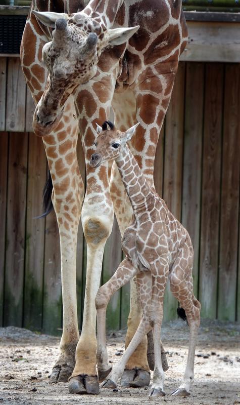 04122019 Memphis Zoo  kpf07.JPG