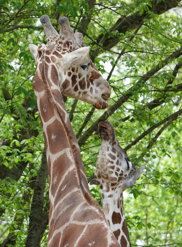 04122019 Memphis Zoo  kpf11.JPG