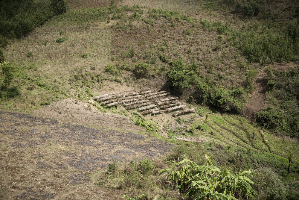 The Ikaning'ombe tree nursery