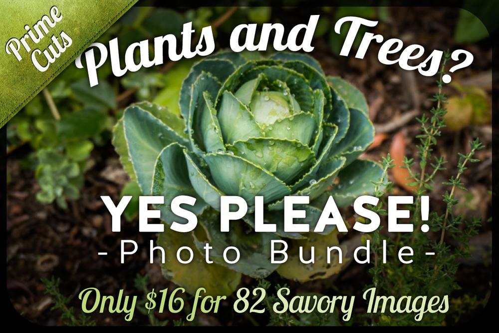 CM-Plants-Tree.jpg