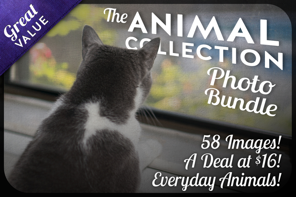 CM-Animal-Collection-5-27-15-1V2.jpg