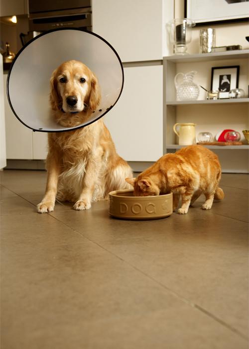 DogCatSurgery.jpg