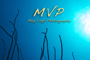 MVP logo2.jpg