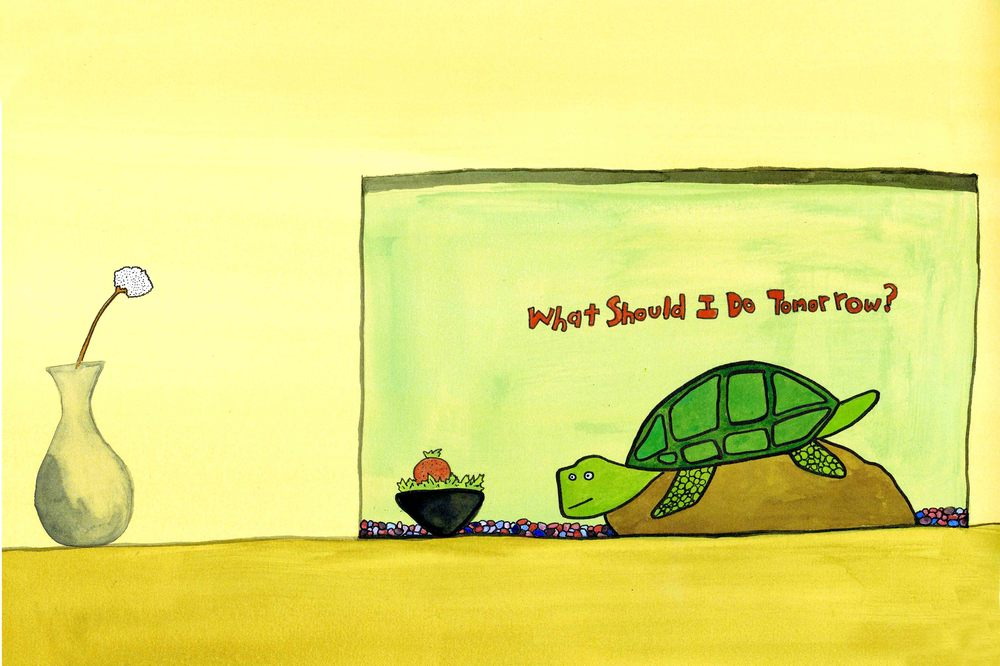 turtle what should I do Final.jpg