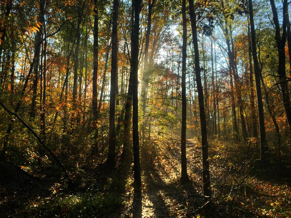 woods (2).jpg