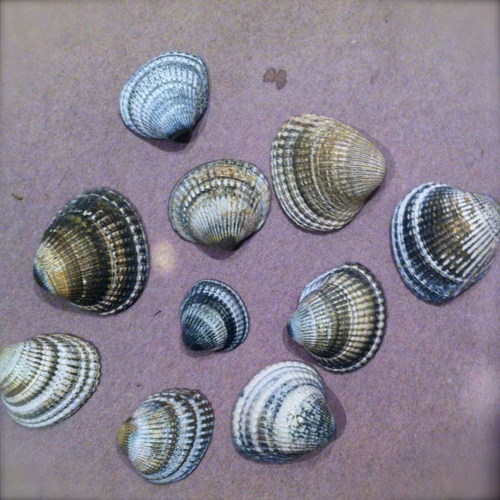 shibori shells