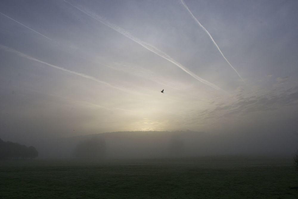 Dawn mist.jpg