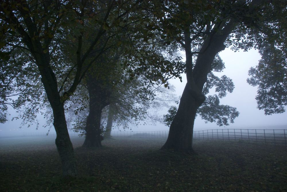 Trees in the fog at West Dean.jpg