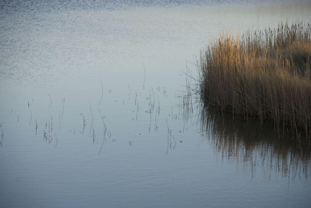 Blakeney reeds.jpg