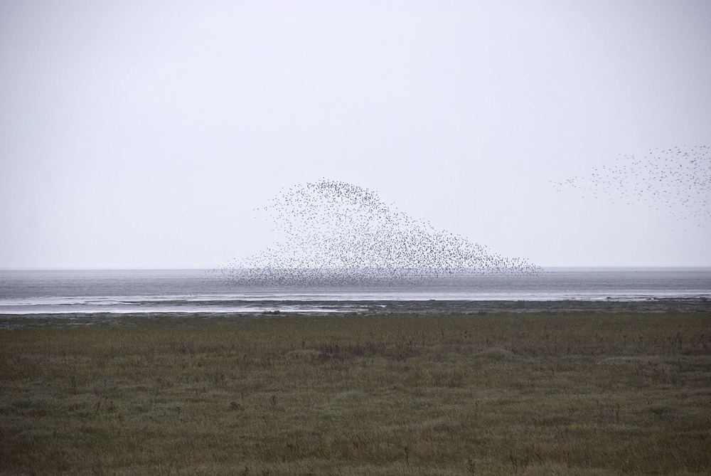 Dengie - Knot over the mud flats