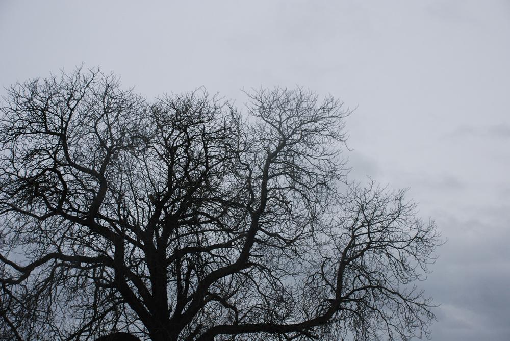 Holkham trees 02 Helen Terry.jpg