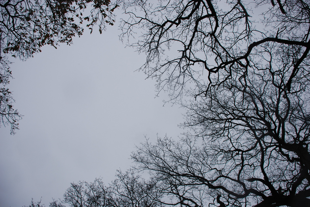Holkham trees 01 Helen Terry.jpg