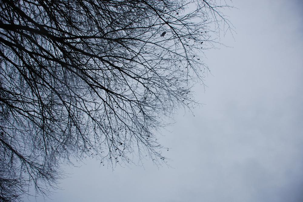 Holkham trees 03 Helen Terry.jpg