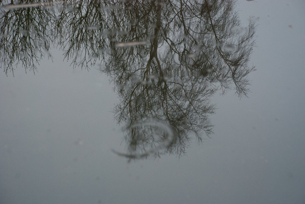 Reflections Wicken Fen Helen Terry January2017-1-8.jpg